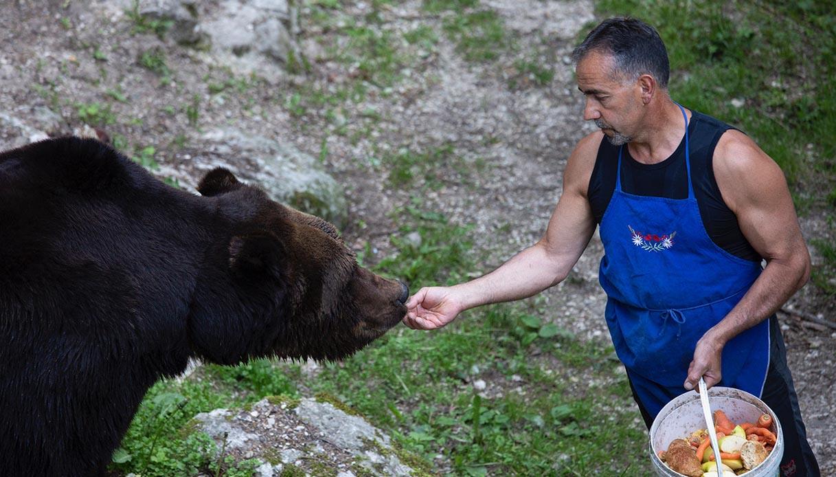 amicizia uomo orso