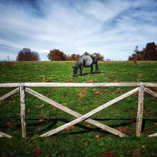 Sepino-cavalli