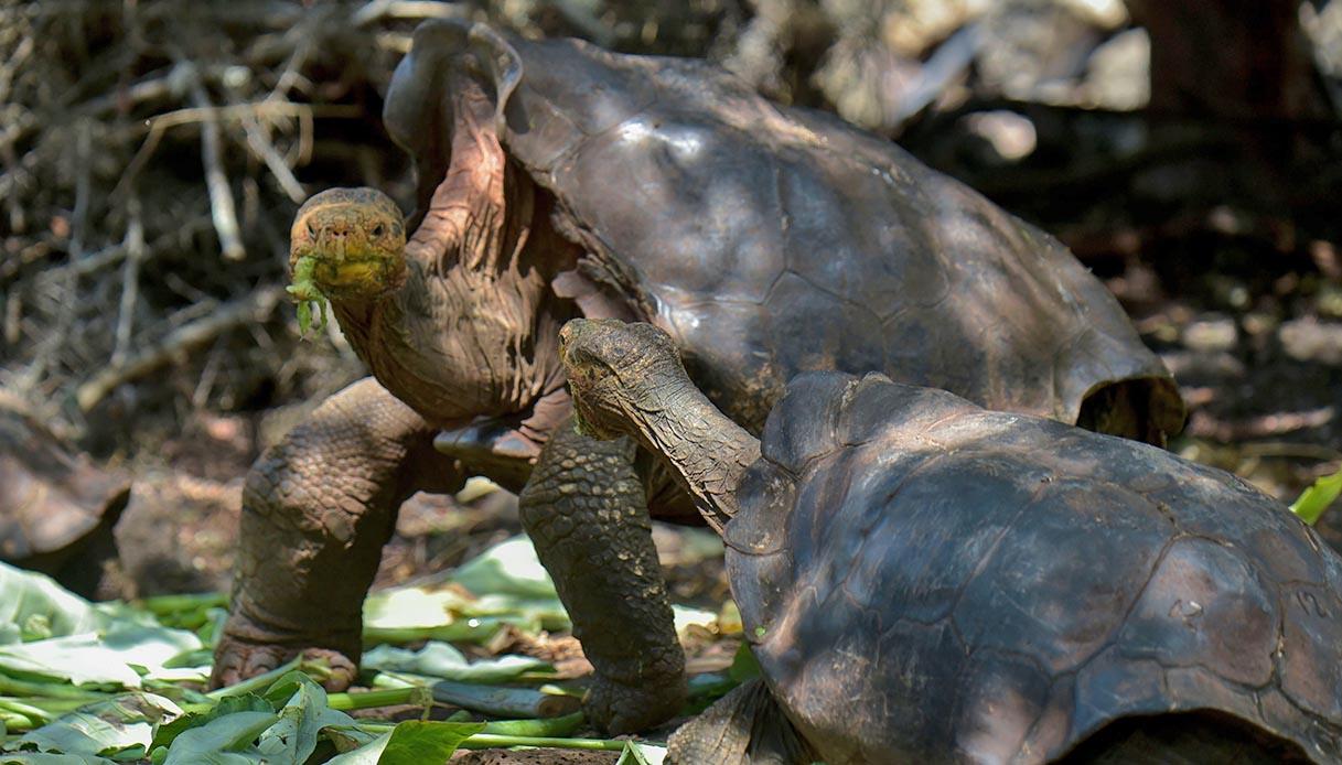 Diego, la tartaruga