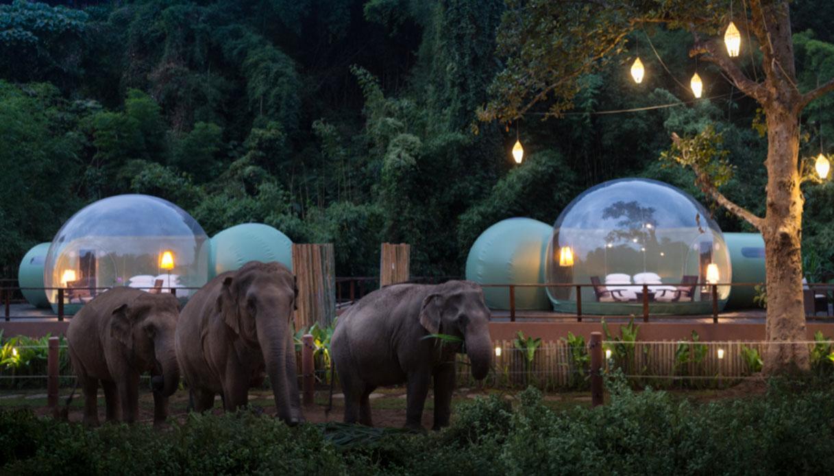 dormire con gli elefanti