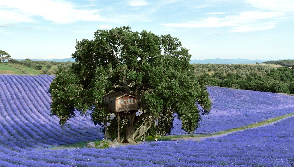 casa sull'albero viterbo