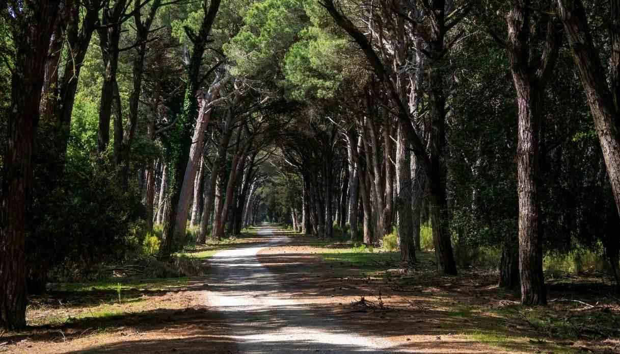 San Rossore parco favole Pisa