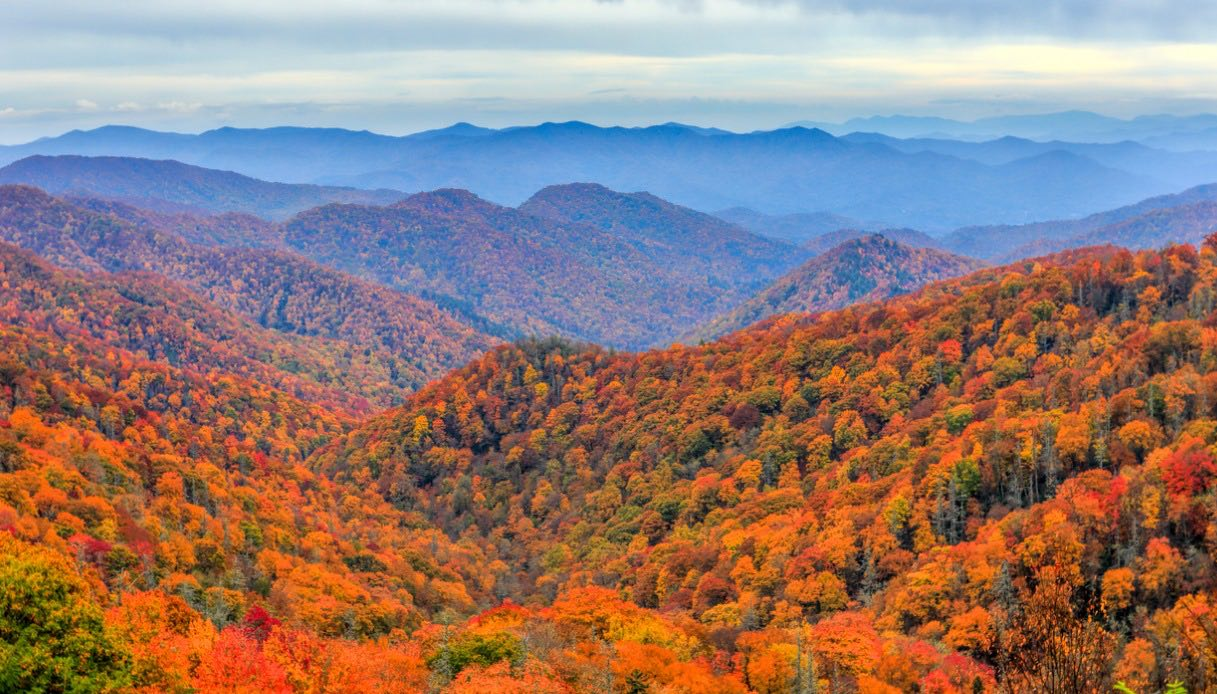 Foliage Great Smoky Mountains