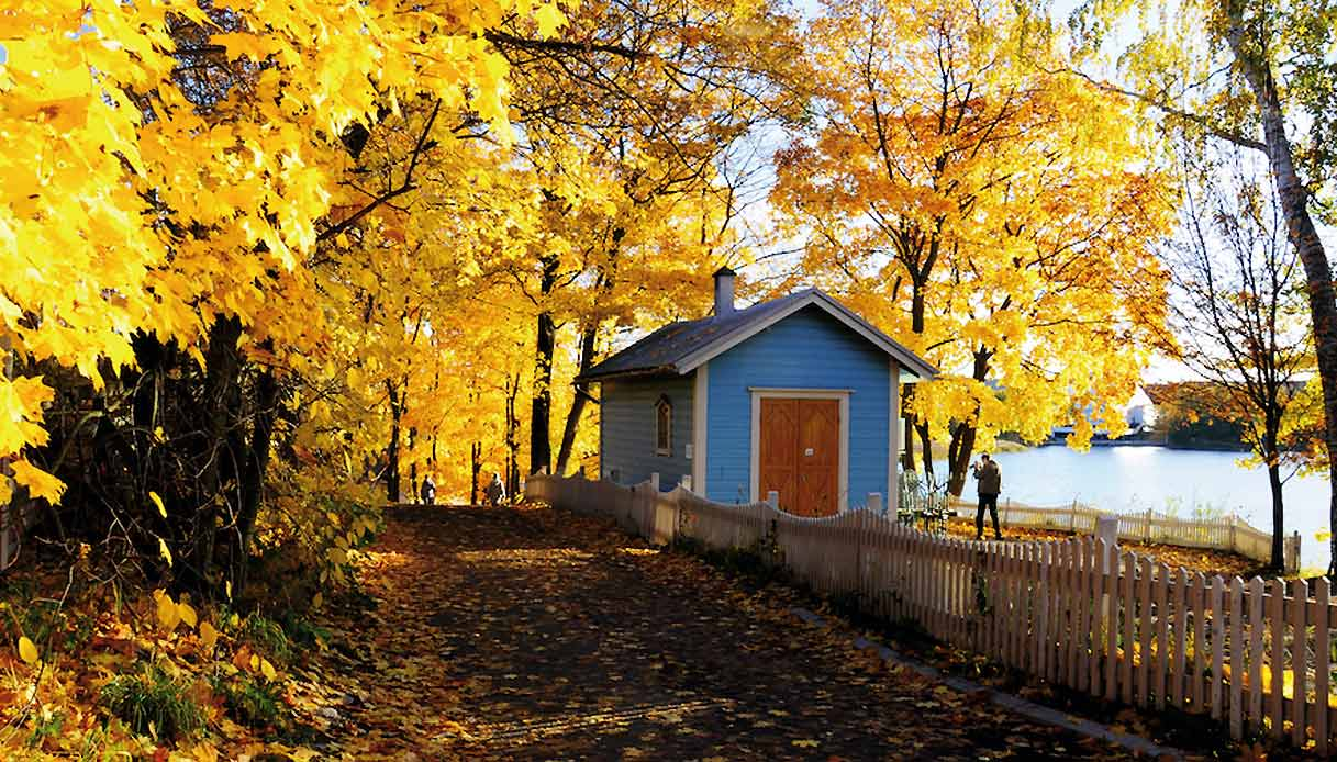 foliage-Ruska_finlandia