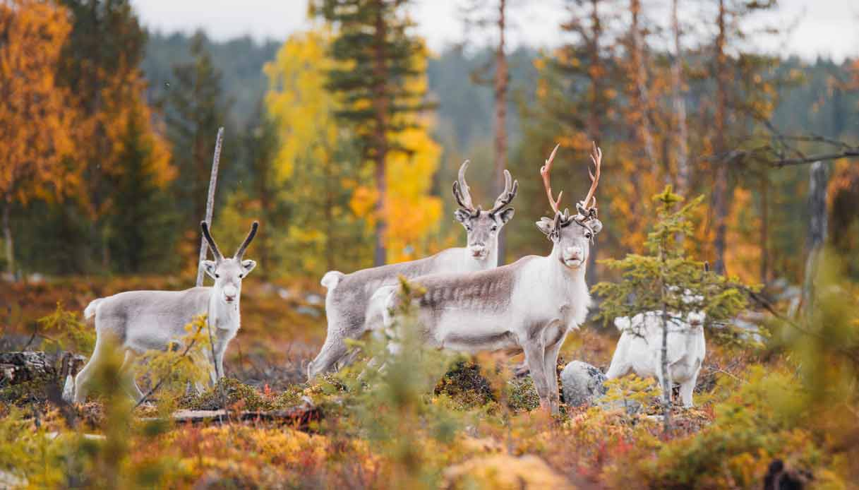 lapponia-finlandia