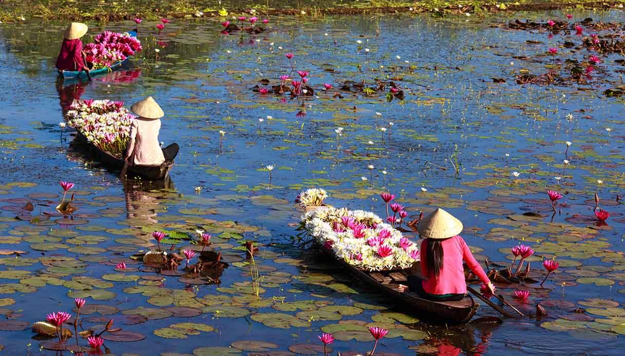 Raccolta dei fiori di loto