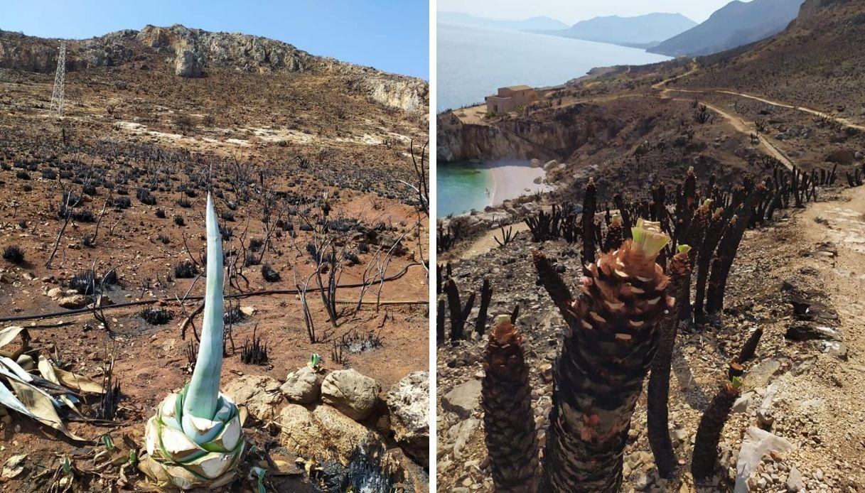 Riserva naturale dello Zingaro dopo l'incendio