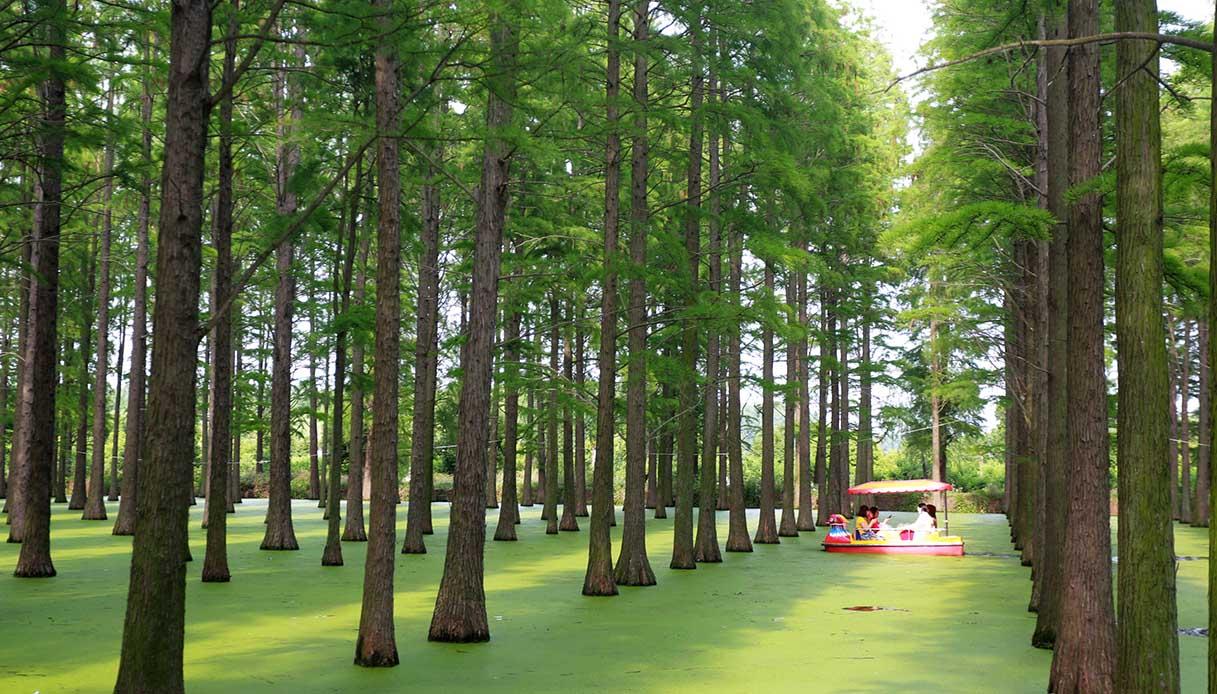 Foresta acquatica di Yangzhou