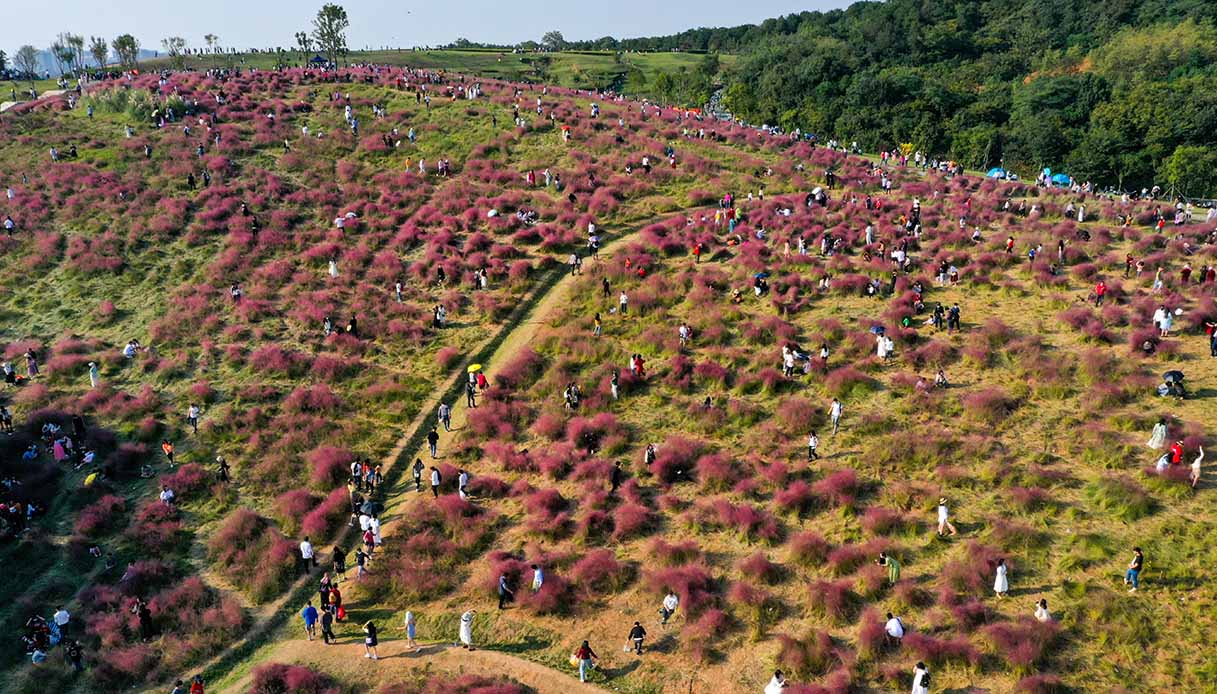 Fioritura erba rossa a Wuhan