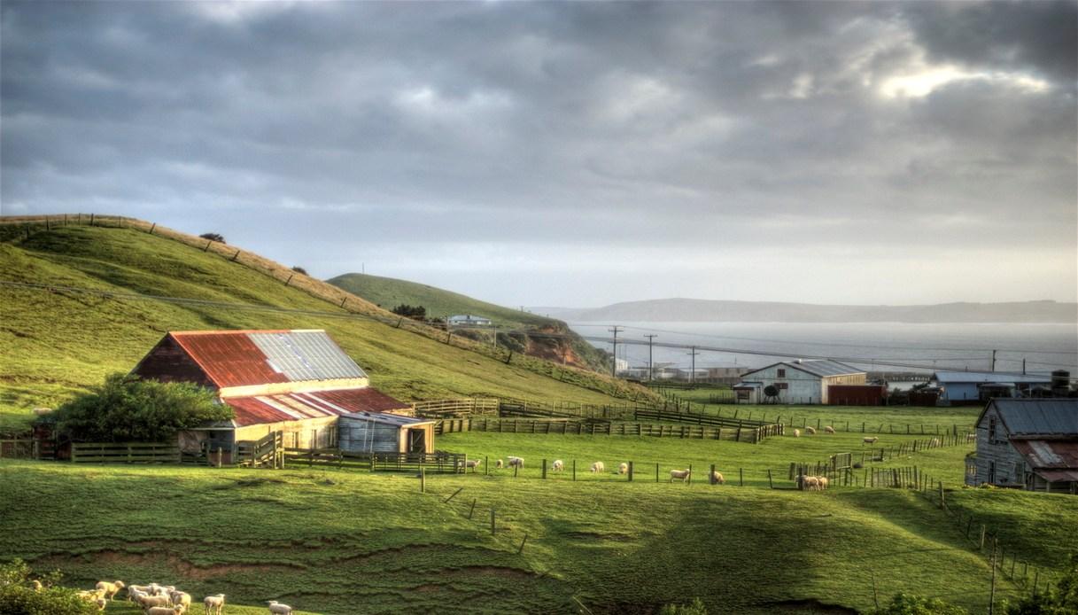 isole Chatham turismo 2020