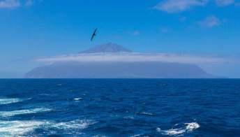 Tristan da Cunha, la più grande area marina protetta dell'Oceano Atlantico