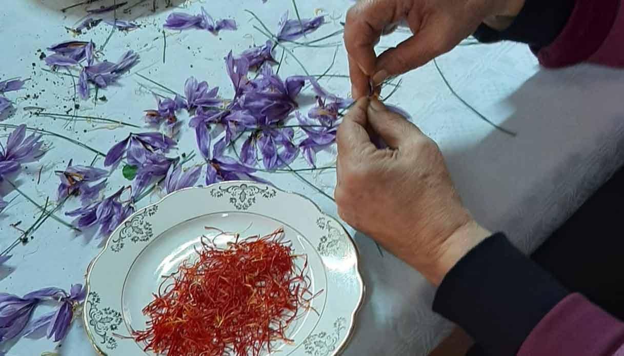 zafferano-fiore-spezia-sardegna