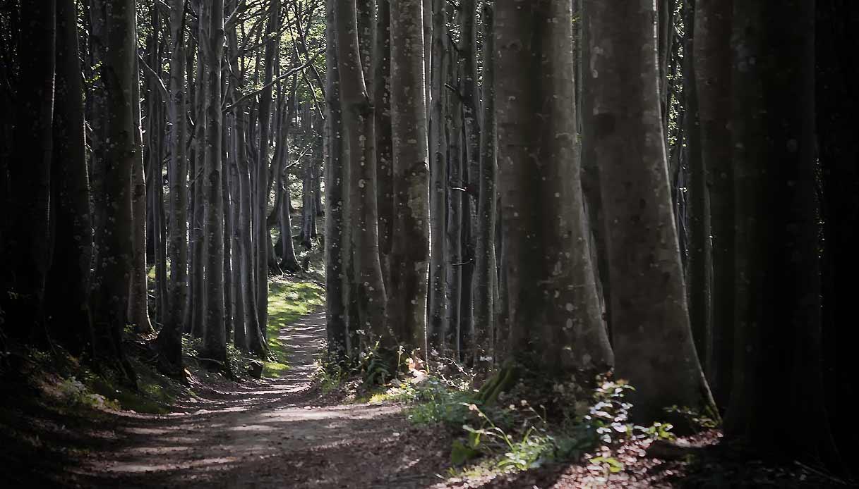 Foreste-Casentinesi