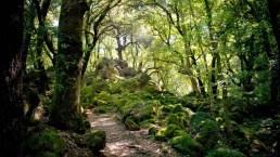 L'Italia dei boschi, i più suggestivi da visitare in primavera