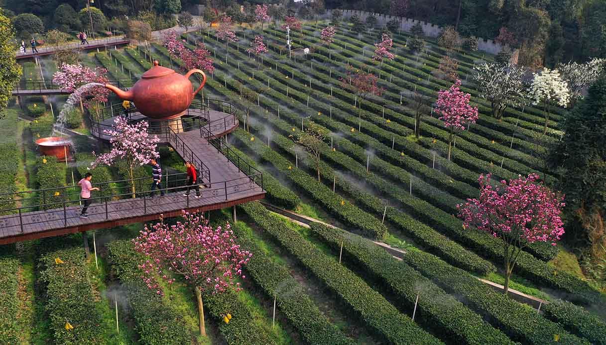 Piantagioni di tè a Yibin, Sichuan