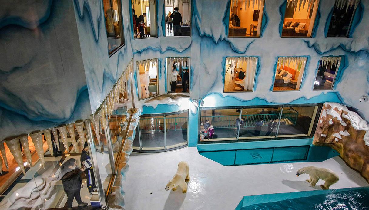 Hotel con vista su orsi polari