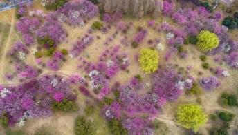 La fioritura di Huaiyin sembra un quadro di Monet