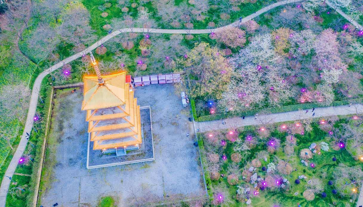 Wuhan un anno dopo: la fioritura dei ciliegi è la più bella