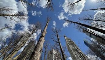 Una foresta fantasma è sorta nel cuore di New York