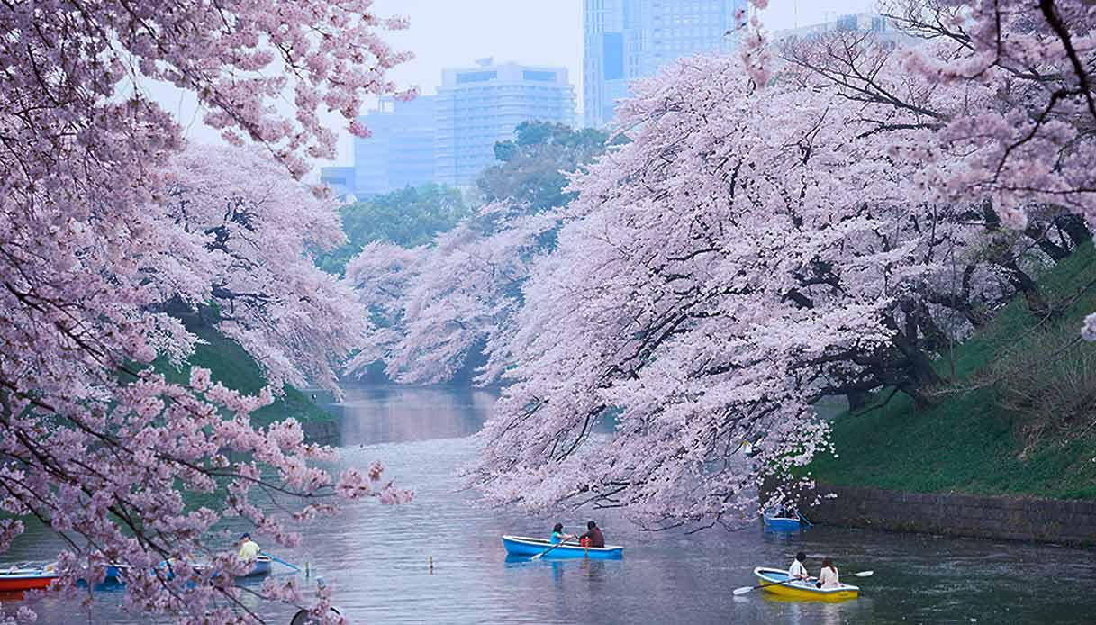 fioritura-ciliegi_Tokyo