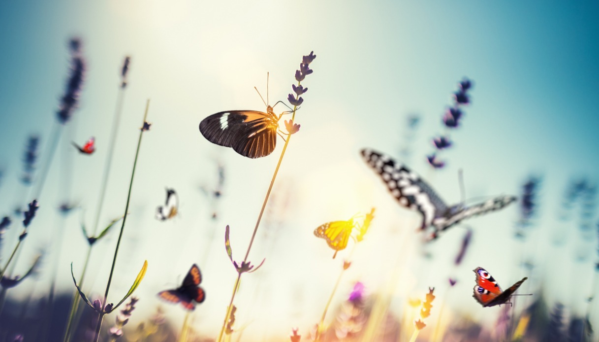 Il sentiero delle farfalle