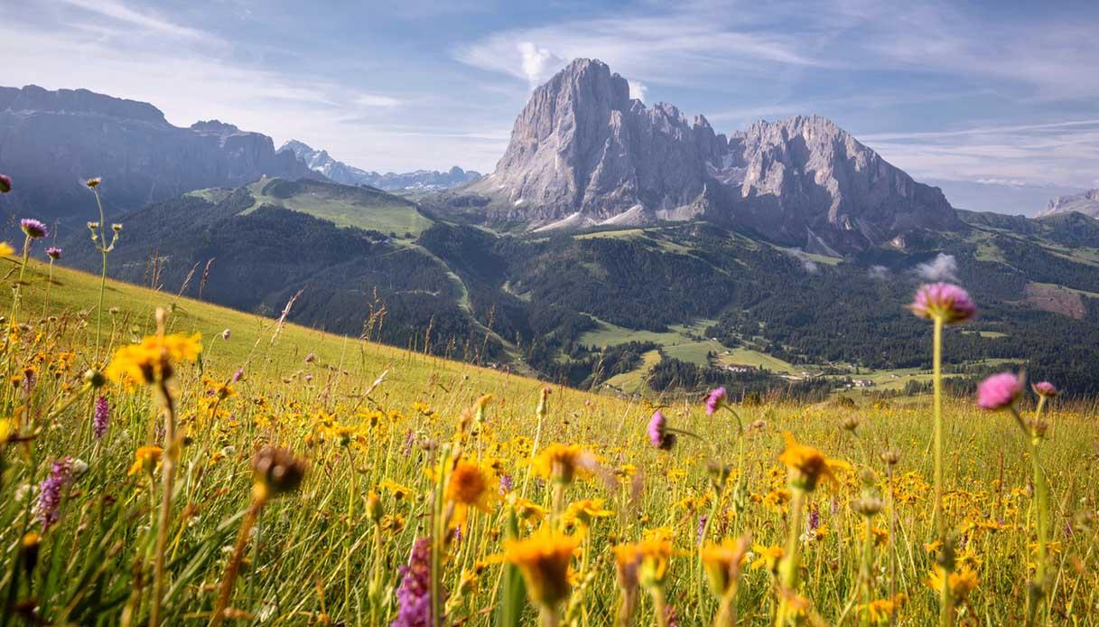 fioritura alta montagna