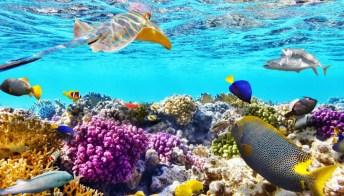 Tra pesci colorati e coralli: sognando la barriera corallina