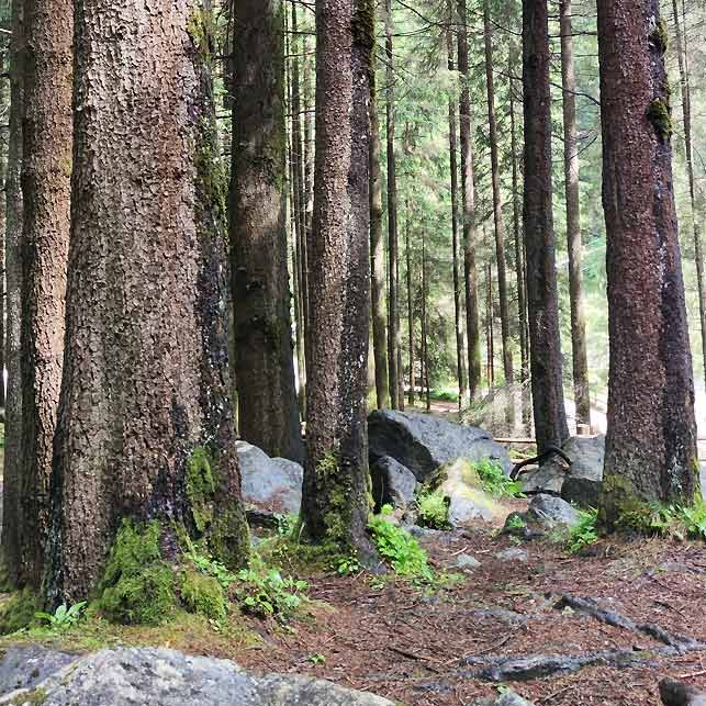sentiero-cascate-riva-valle-aurina-bosco