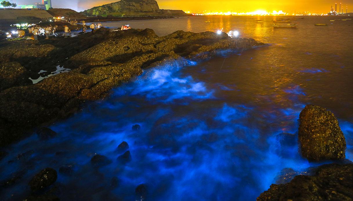 Dalian alga fluorescente