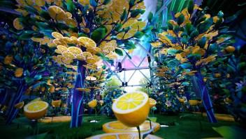 Un suggestivo giardino di limoni è apparso nel cuore di Manhattan