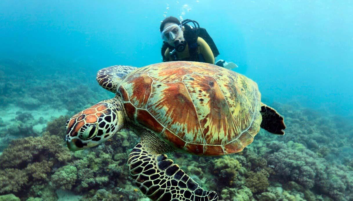 Nuotare con le tartarughe, dove farlo nel mondo