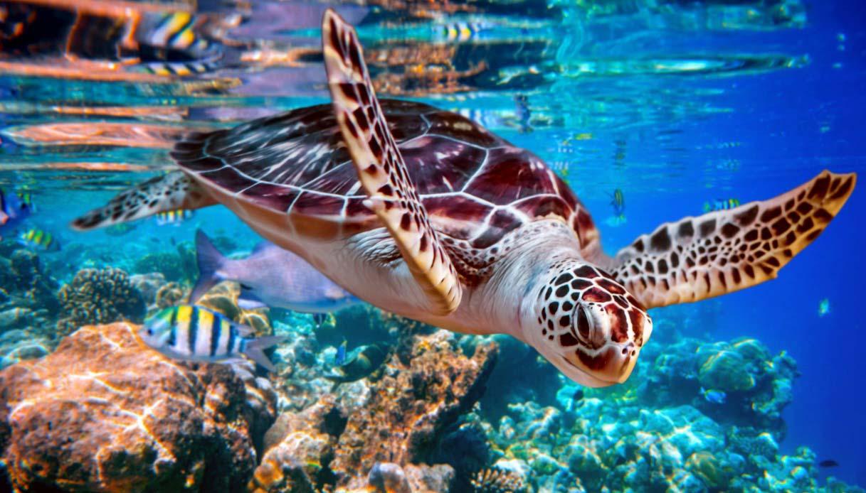 nuotare con le tartarughe