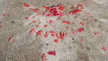 Le Rose di Sarajevo sono il ricordo indelebile degli anni dell'assedio