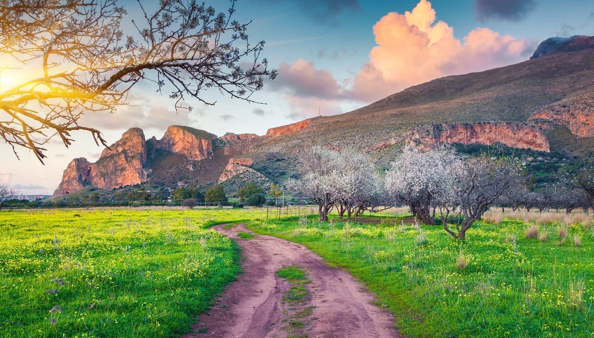 Mandorli in fiore in Sicilia