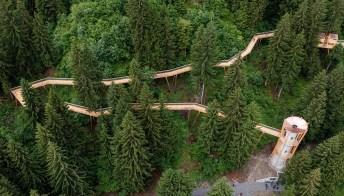 Camminando tra le cime degli alberi sul sentiero più lungo del mondo