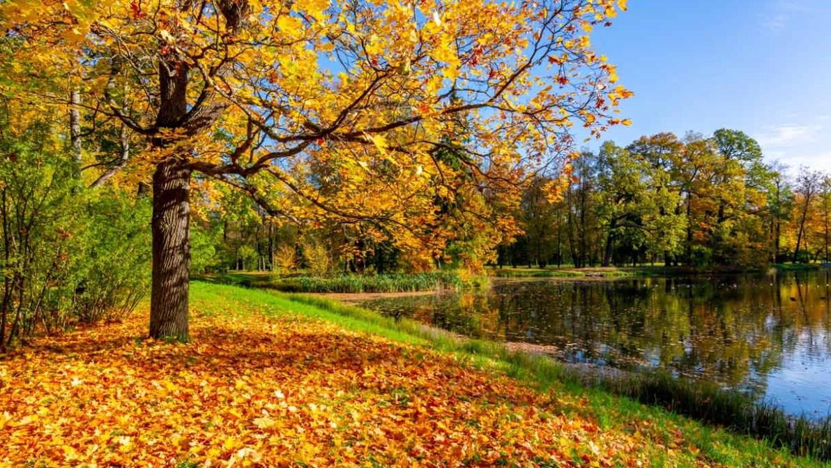 La magia del foliage