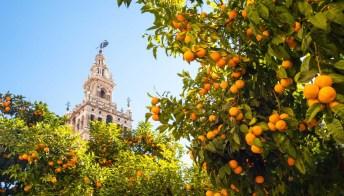 Siviglia è la città delle arance: il modo in cui si usano ti stupirà