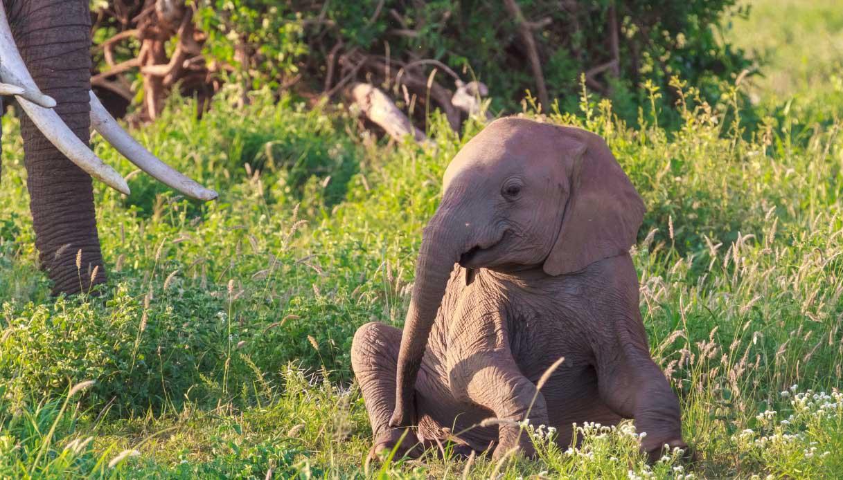 Adottare un elefante in Kenya