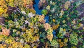 Ci sono dei messaggi segreti nascosti in questo bosco
