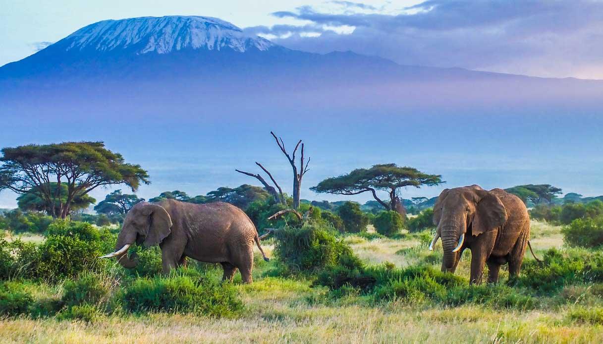 Parco nazionale di Amboseli
